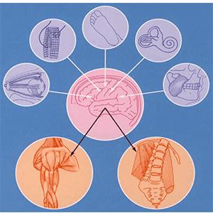 posturologie ostéopathe essonne