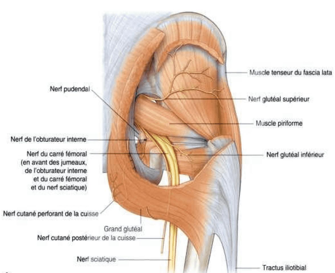 urgence steopathe sciatique 93